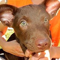 Adopt A Pet :: Hersey - Cincinnati, OH