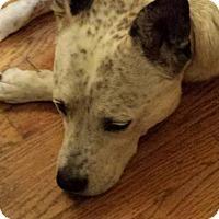Adopt A Pet :: Pebbles - ROME, NY