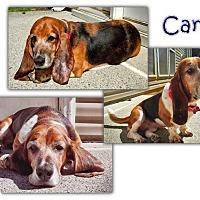 Adopt A Pet :: Carli - Marietta, GA