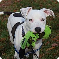 Adopt A Pet :: Opal - Mount Laurel, NJ