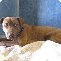 Adopt A Pet :: Missy - Ridgway, CO