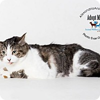 Adopt A Pet :: Sunflower - Alexandria, VA