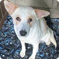 Adopt A Pet :: Honey - Clear Lake, IA