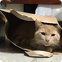 Adopt A Pet :: Glen Hansard - St. Louis, MO