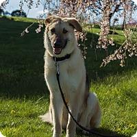 Adopt A Pet :: Anastasia - New Oxford, PA