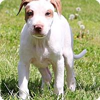 Adopt A Pet :: Lennon - Glastonbury, CT