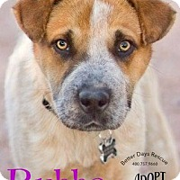 Adopt A Pet :: Bubba - Scottsdale, AZ