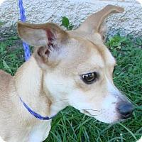Adopt A Pet :: Emmie - Erwin, TN