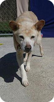 Shepherd (Unknown Type)/Labrador Retriever Mix Dog for adoption in Canastota, New York - Mittens