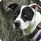 Adopt A Pet :: Asia