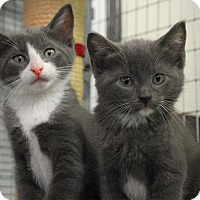 Adopt A Pet :: Bowie & Prince - Winchendon, MA