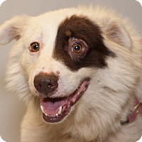 Adopt A Pet :: Chauncy - Martinsville, IN