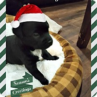 Adopt A Pet :: Joey - Plainfield, IL