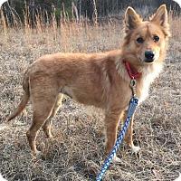 Adopt A Pet :: Paprika - Westminster, MD