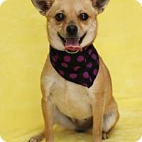 Adopt A Pet :: Sadie E - Yucaipa, CA