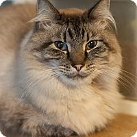 Adopt A Pet :: Creeton - Faribault, MN