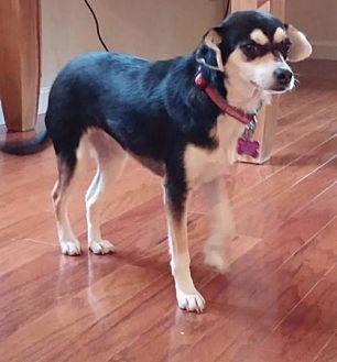 Dog Adoption Arlington Wa