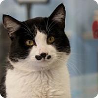 Adopt A Pet :: Zorro - Martinsville, IN