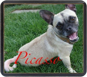 French Bulldog/Pug Mix Dog for adoption in Orange, California ...