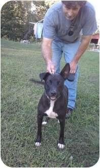 Feist/Terrier (Unknown Type, Medium) Mix Dog for adoption in Allentown, Pennsylvania - Muffin
