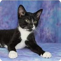 Adopt A Pet :: Sami - Norwich, NY
