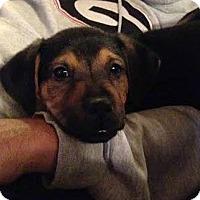 Adopt A Pet :: Prince - Atlanta, GA