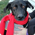 Adopt A Pet :: Pharoah