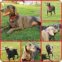 Adopt A Pet :: LUNA - Davenport, FL