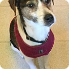 Adopt A Pet :: Cosmo