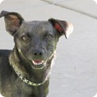 Adopt A Pet :: Maggie May - Las Vegas, NV