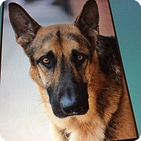 Adopt A Pet :: KOBE VON KOTHENS - Los Angeles, CA