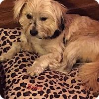 Adopt A Pet :: Stanley - Nashville, TN