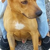 Adopt A Pet :: Diego (Courtesy Posting) - Elyria, OH