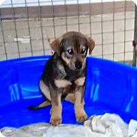 Adopt A Pet :: Jasper - Rochester, NY
