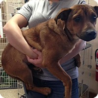 Adopt A Pet :: Coral - Cashiers, NC
