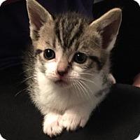Adopt A Pet :: Hershey - Greenville, NC