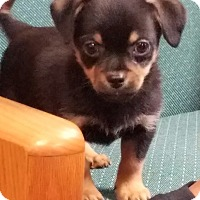 Adopt A Pet :: BALOO - Gustine, CA