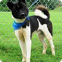 Adopt A Pet :: Kato - Oswego, IL