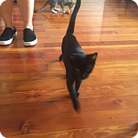 Adopt A Pet :: Sid *Funloving Foursome* - Los Angeles, CA