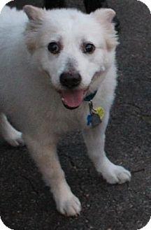 Australian Cattle Dog Mix Dog for adoption in West Des Moines, Iowa - Elsie