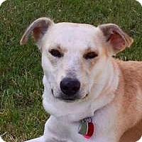 Adopt A Pet :: Malachi - Yukon, OK