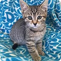 Adopt A Pet :: Pixie - Eureka, CA