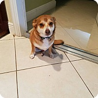 Adopt A Pet :: TOBY - Hollywood, FL