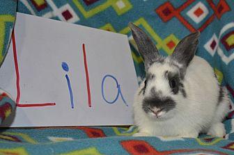 American for adoption in Erie, Pennsylvania - Lila