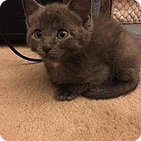 Adopt A Pet :: Logan - Jackson, NJ