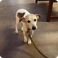 Adopt A Pet :: Scotty - Wilmington, DE