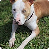 Adopt A Pet :: Pinky - Miami, FL