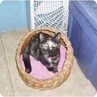 Adopt A Pet :: Delaware - Hamburg, NY