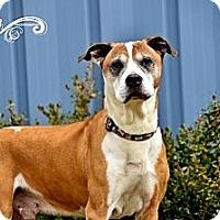 Adopt A Pet :: Poncho - Charlotte, NC