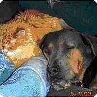 Adopt A Pet :: Frau - Scottsdale, AZ
